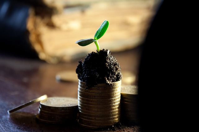 růst peněz.jpg